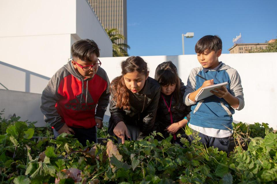 A group of elementary students examine the plants in their school garden.